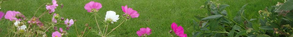 hovenier-middelstum-kasteel-tuinen.jpg